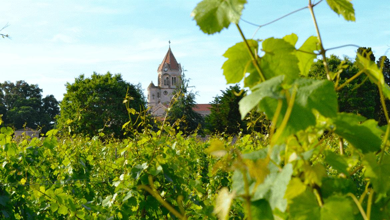 À la découverte de l'abbaye de Lérins, entre terre, mer et Ciel…