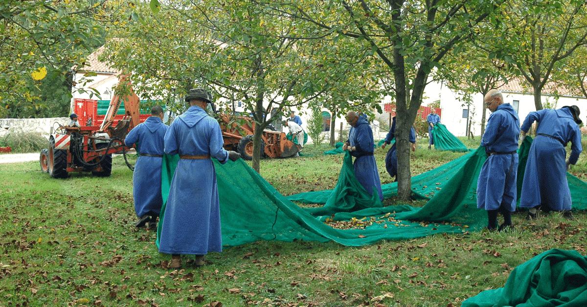 Le travail manuel des moines de Sainte-Marie de La Garde (fondation du Barroux)