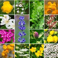 Prière et Santé par les plantes les 15 & 16 juin 2019 au Grand Couvent de Gramat (46)